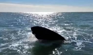 Pescadores registraron el paso de ballenas cerca de su embarcación
