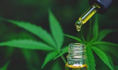 Cannabis medicinal: la Corte ordenó que una obra social lo provea a un niño que padece epilepsia refractaria